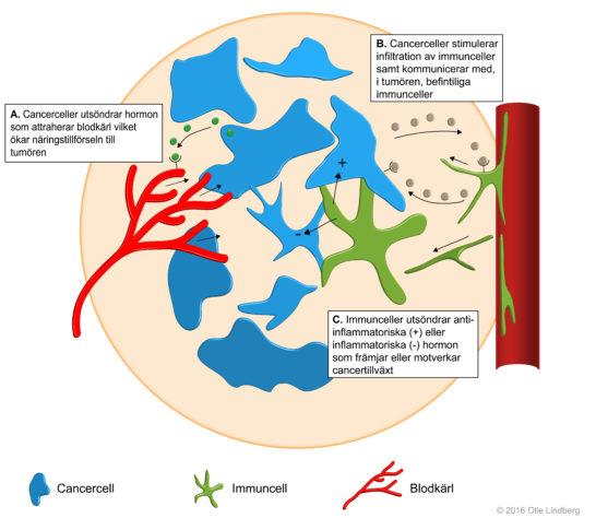 Cancercellers närmiljö